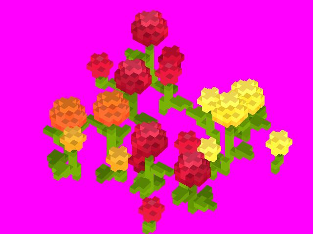 Chrysanthemum_Corner